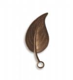 Catalpa Leaf